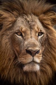 Ukraińska gospodarka wciąż rośnie w siłę - LEW król zwierząt